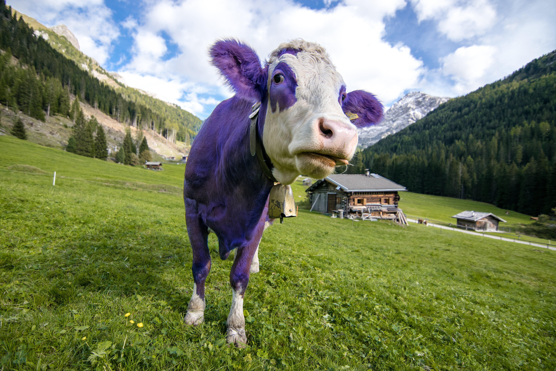Purple Cow Home Services Companies